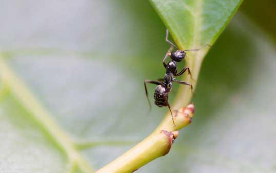 Ameisen sind ein Geniestreich der Natur