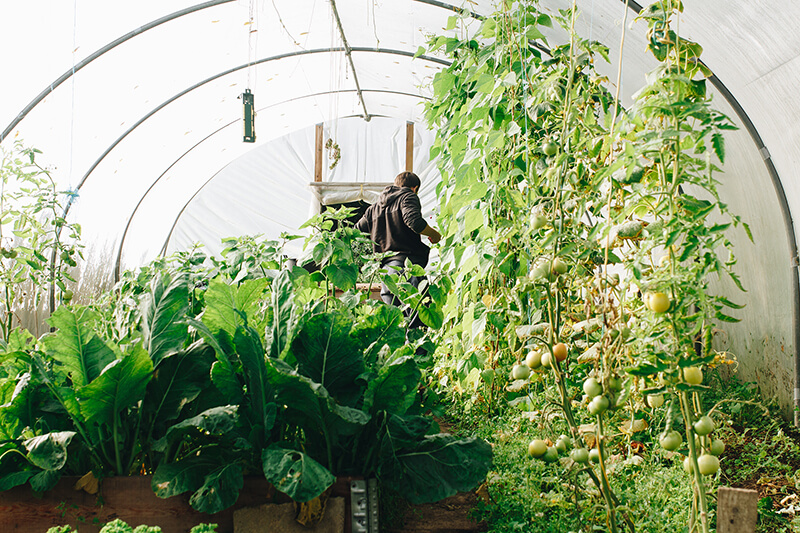 Gewächshaus voller Gemüse