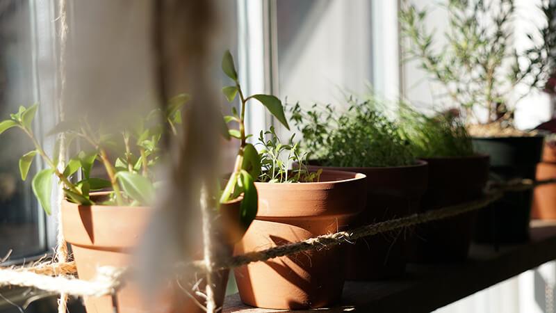 Anbauen ohne Garten - Balkon Gewächshaus